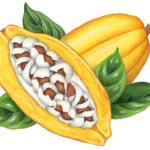 One cut yellow cacao half and one whole cacao with four leaves