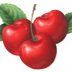 Three sweet red cherries with leaves