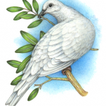 Watercolor bird painting of a dove with an olive branch