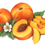 Two whole peaches, four slices, one cut peach half with leaves and blossom