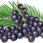 Four strands of purple acai berries with a palm branch