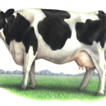 Watercolor animal illustration of a Holstein cow in a field