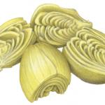 Four marinated artichoke halves