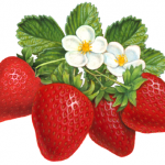 Four strawberries with leaves and two flowers