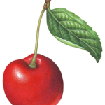 Single red cherry with a stem and a leaf