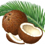 Coconut still life with whole coconut, coconut half, coconut piece and a palm branch