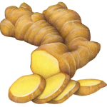 Ginger root with four ginger slices