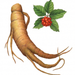 Ginseng root with separate leaves and flowers