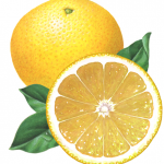 Whole yellow grapefruit with a straight on view of a cut grapefruit half and leaves