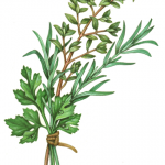 Herb bundle of parsley, rosemary and thyme