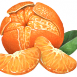 Mandarin orange (tangerine) peeled with two segments and a leaf