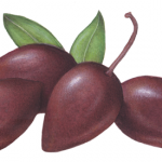 Four Kalamata jumbo olives