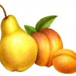 Bartlett pear, peach and apricot