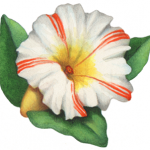 White petunia with red stripes and leaves