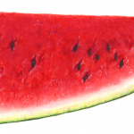 Watermelon cut half wedge with a horizontal view