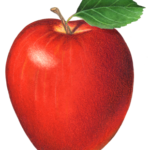 Single red delicious apple with a leaf.
