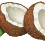 Two coconut cut halves with leaves.