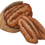 Pecan half in shell and a separate shelled pecan half.