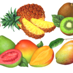 Food illustrations of tropical fruit including dragon fruit, pineapple, mangosteen, kiwi, passion fruit, guava, and mango.