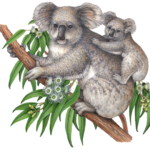 Koala mother with baby on a eucalyptus tree branch with leaves and eucalyptus flowers.