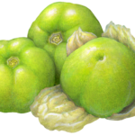 Three tomatillos.