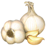 Two whole heads of garlic with two garlic cloves.