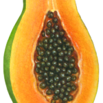 Cut half of a papaya.