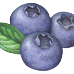 Berry stock art of three blueberries with a leaf.