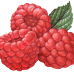 Three raspberries with a leaf.