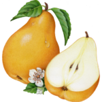 Whole Bartlet pear with a cut half pear, pear blossom and leaves.