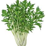 Japanese mizuna plant