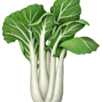 Bak Choy plant with stalks and leaves