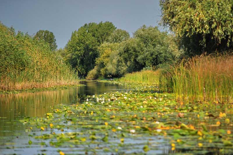 Danube-delta