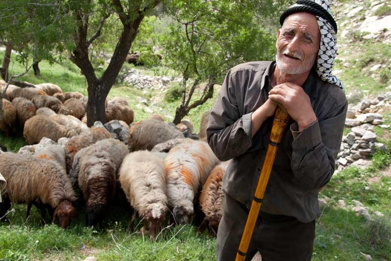 Israel-Shepherd