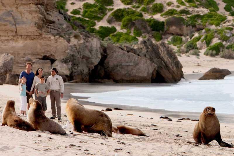 kangaroo-island-parks-wildlife