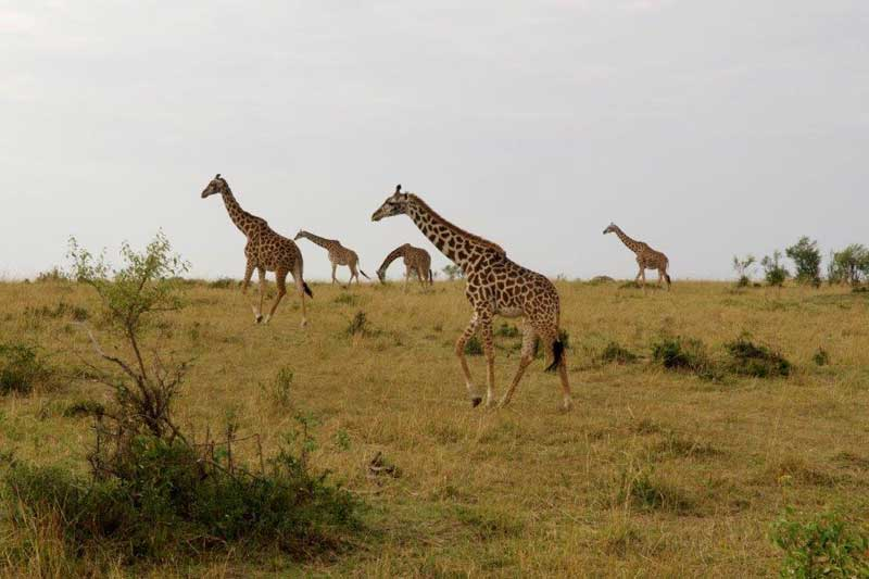 Jambo-Safari