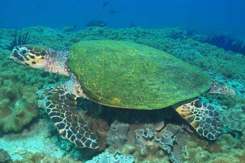 Oman8_Turtle