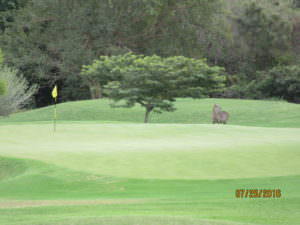 Golfers share Leopard Creek with wildlife