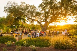 Daytime events take place under the oak