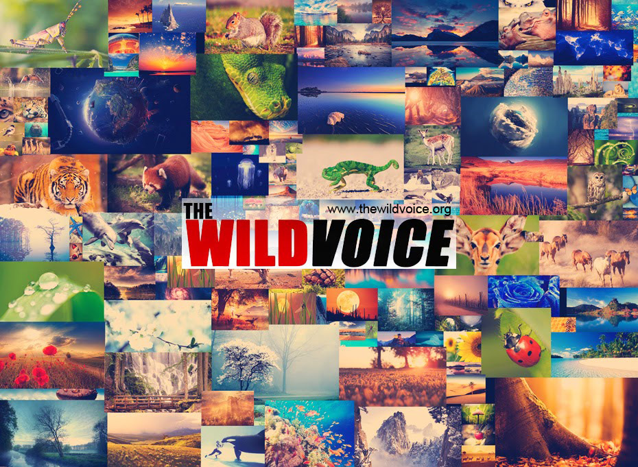 Collage of creation - the wild voice