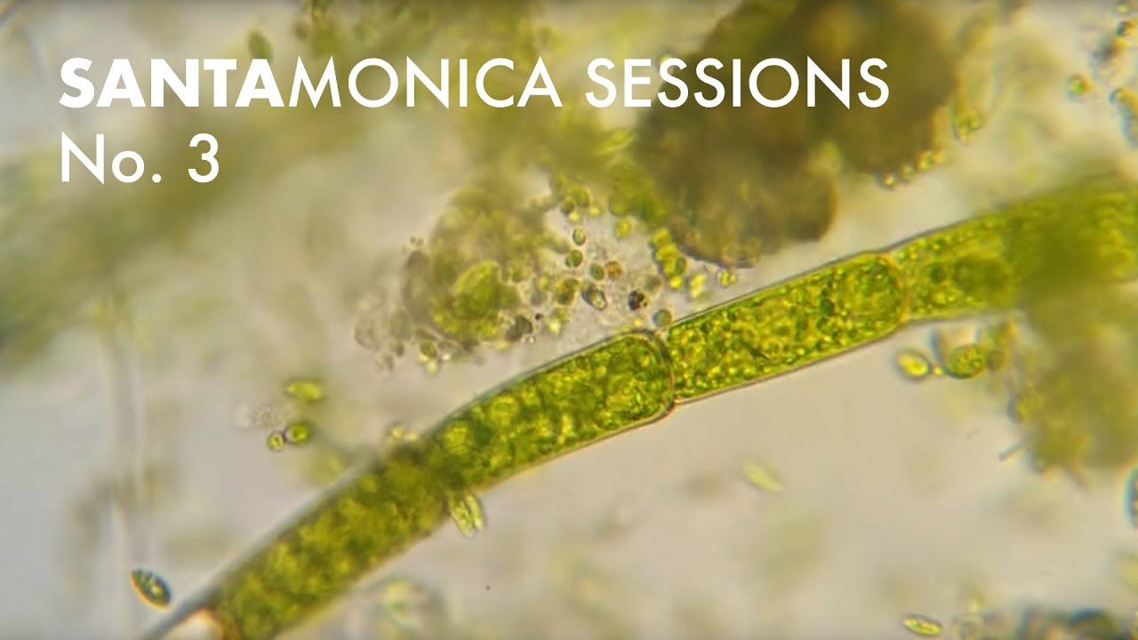 Santa Monica Sessions No. 3: Cassette Loops + Electro-Acoustics…
