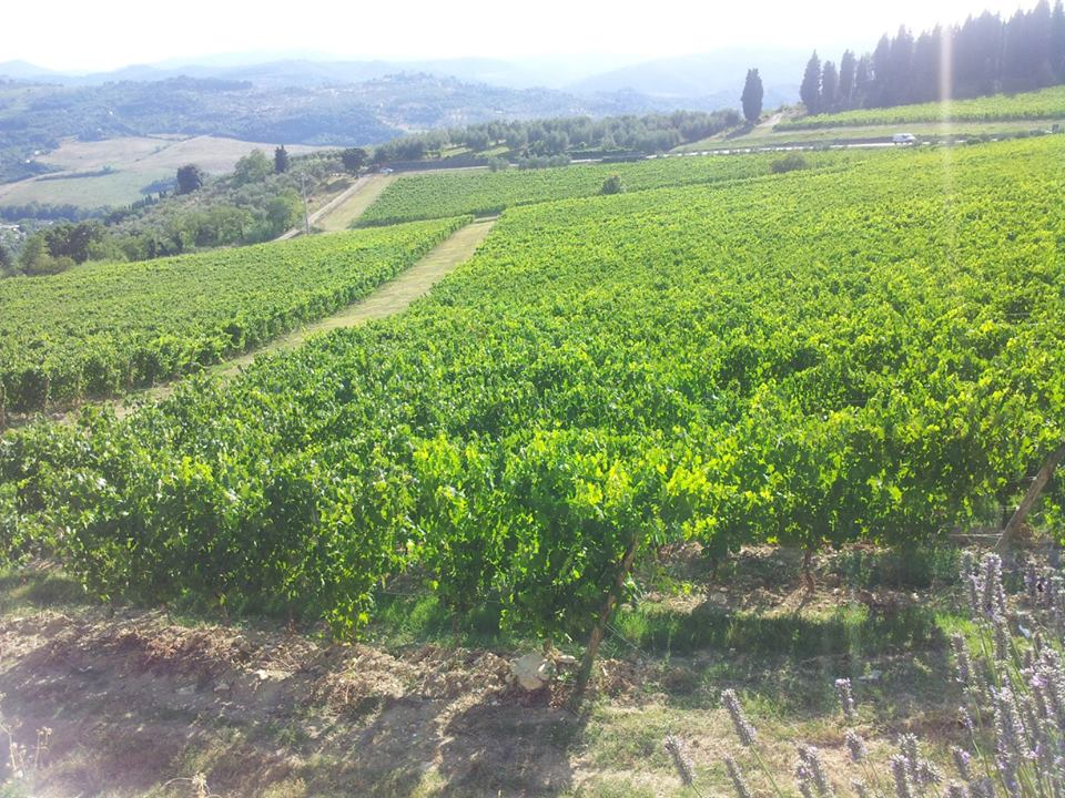 When you need a break, visit a Tuscan winery!