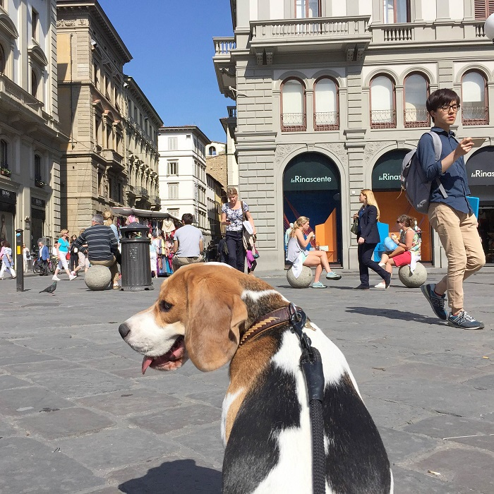 That smiling face has peed on every sidewalk in Florence