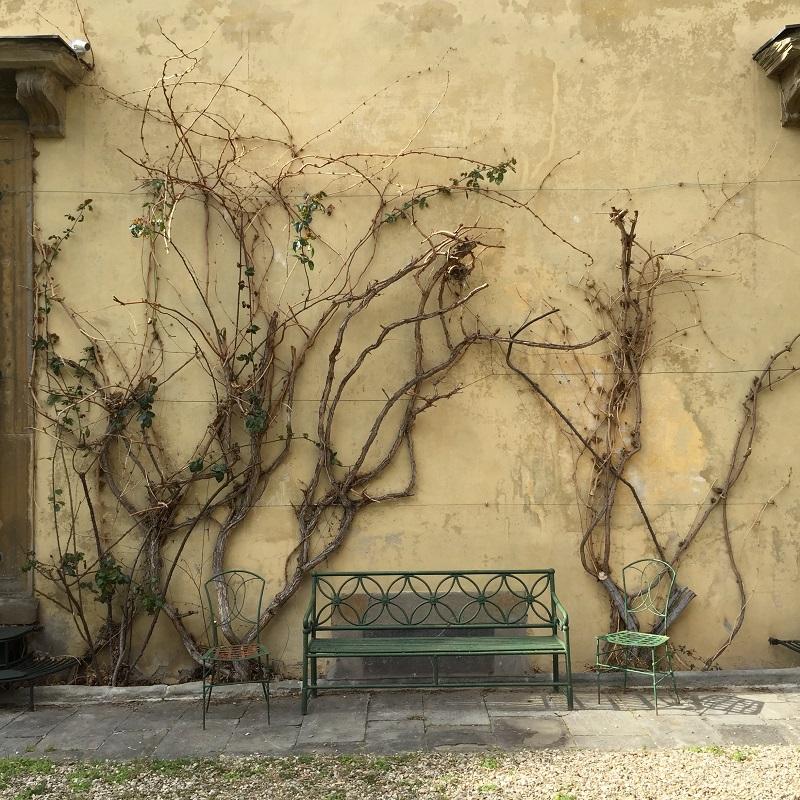 Garden gone wild by Palazzo Pandolfini