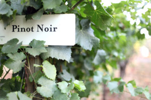 Pinot Noirs in the Willamette Valley