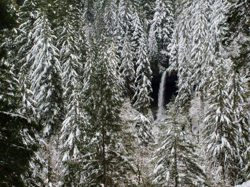 Silver Falls State Park on the Willamette Valley Wine & Waterfalls Tour
