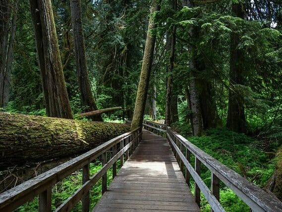 Seattle Tours to Mount Rainier feature Grove of the Patriarchs