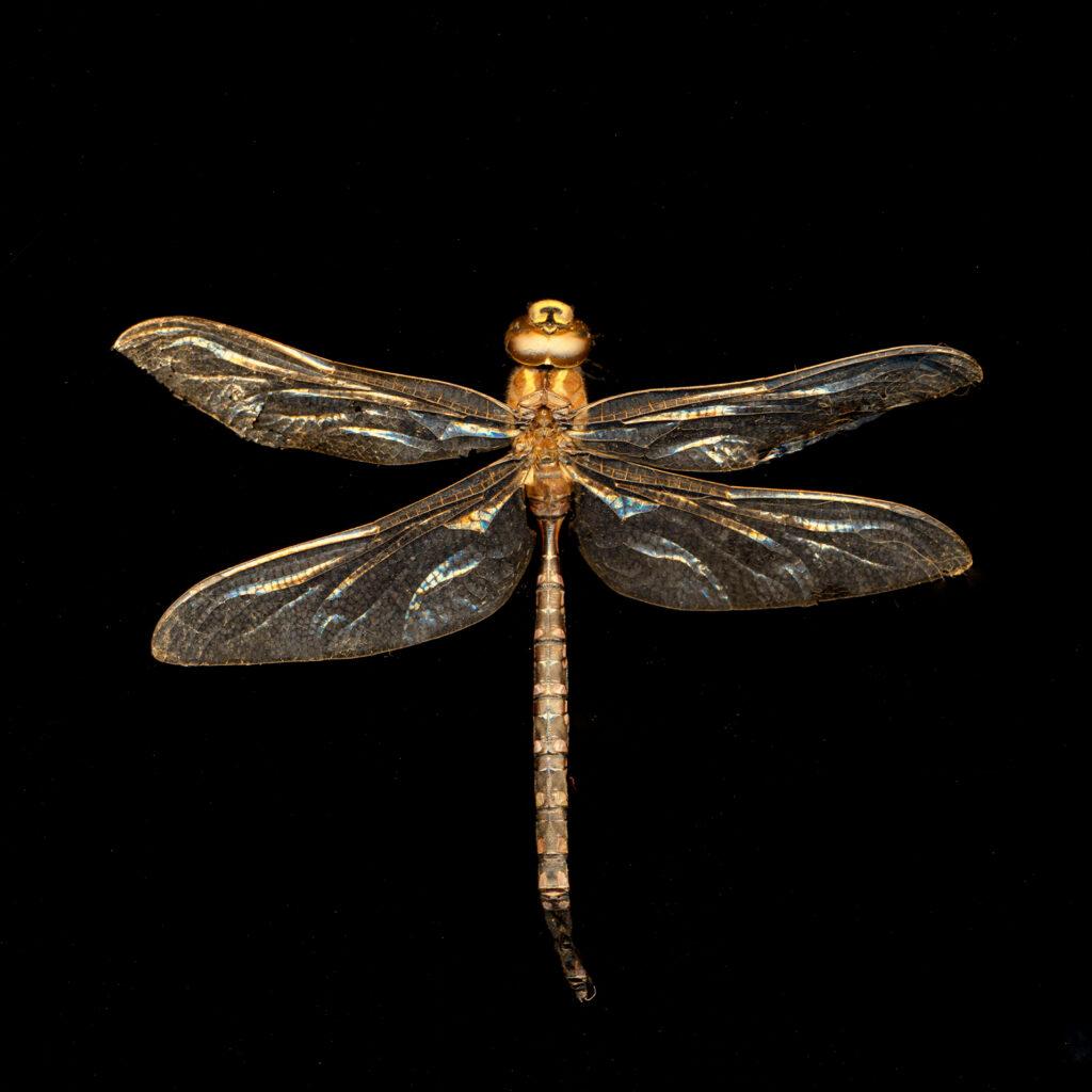Dragonfly 2 copy (1)