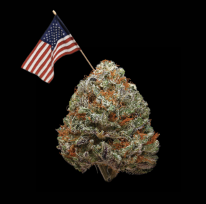 a marijuana nug with an american flag sticking out of it