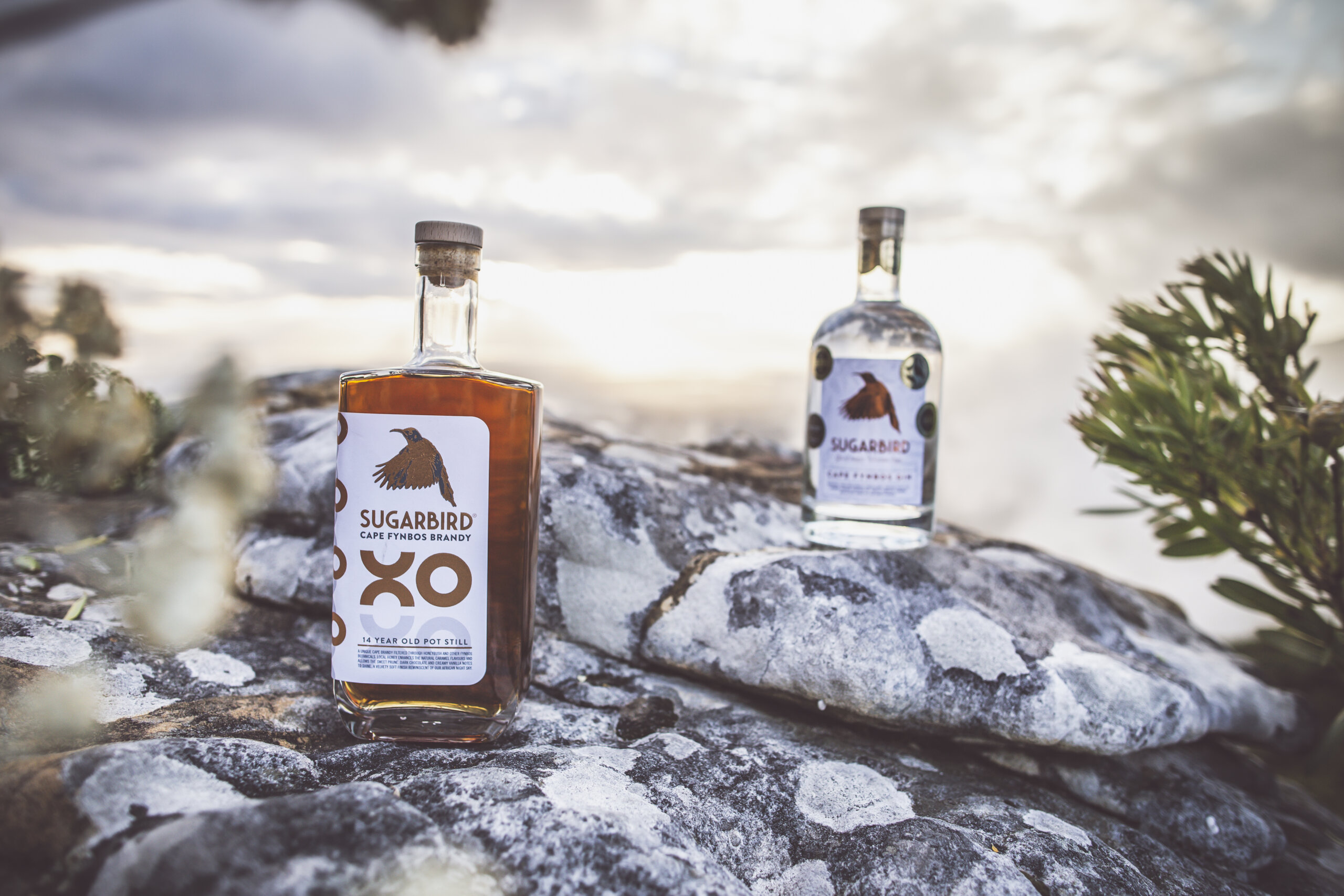 CAPE TOWN'S SUGARBIRD CRAFT GIN, SPREADS ITS WINGS TO BRANDY